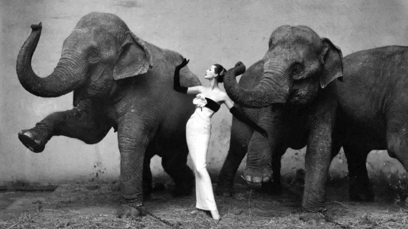 The Girl With Elephants